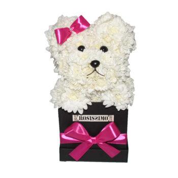 Virág kutya – Rosissimo dobozban